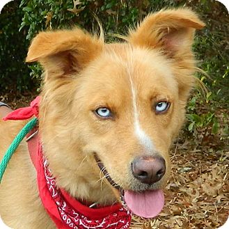 Collie Mix Dog for adoption in McCormick, South Carolina - Mandy