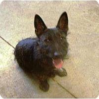 Adopt A Pet :: Midge - Irvington, KY
