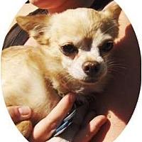 Adopt A Pet :: Aldous - Chandler, AZ