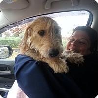 Adopt A Pet :: Barnaby - Freeport, NY