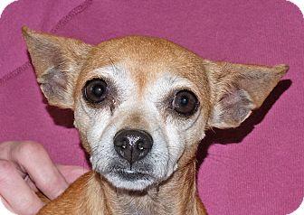 Chihuahua Mix Dog for adoption in Spokane, Washington - Sarah