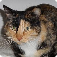 Adopt A Pet :: Halica - North Highlands, CA