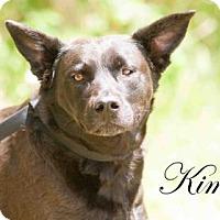 Adopt A Pet :: Kimbo - Middleburg, FL