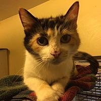 Adopt A Pet :: Patchouli - Delmont, PA