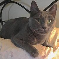 Adopt A Pet :: Allie Cat - JC CP - Trenton, NJ