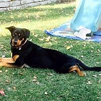 Adopt A Pet :: Kona - Irvine, CA