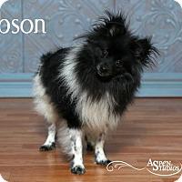 Adopt A Pet :: Gibson - Valparaiso, IN