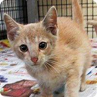 Adopt A Pet :: Jude - Chattanooga, TN