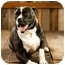 Photo 1 - American Pit Bull Terrier/Boxer Mix Dog for adoption in Portland, Oregon - Boomer
