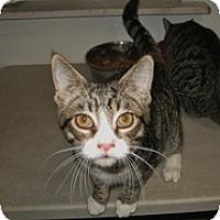 Adopt A Pet :: Dakota - Shelton, WA