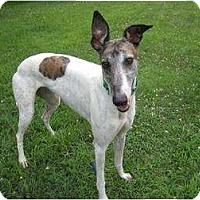Adopt A Pet :: Punky (CG Punky) - Chagrin Falls, OH