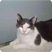 Adopt A Pet :: Dax - Mission, BC
