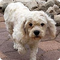 Adopt A Pet :: Risto - Torrance, CA