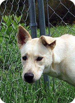 German Shepherd Dog Dog for adoption in Lewisburg, West Virginia - Quindalnn