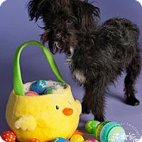 Adopt A Pet :: Thistle - Phoenix, AZ