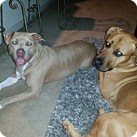 Adopt A Pet :: Kingston - Houston, TX
