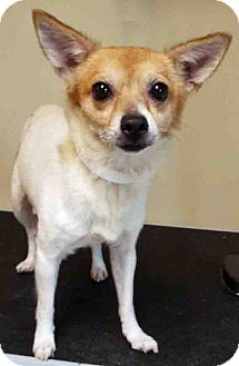 Terrier (Unknown Type, Small) Mix Dog for adoption in Hinsdale, Illinois - Adopted in Clear the Shelters!
