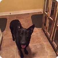Adopt A Pet :: Licorice - Houston, TX