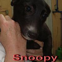 Adopt A Pet :: Snoopy - Coleman, TX