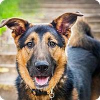 Adopt A Pet :: Forest - Boulder, CO