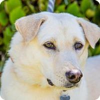 Adopt A Pet :: Bell - San Diego, CA