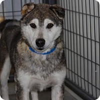 Adopt A Pet :: Adam - Colorado Springs, CO