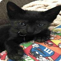 Adopt A Pet :: ONYX - Louisville, KY