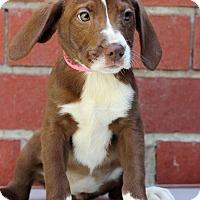 Adopt A Pet :: Gretchen - Waldorf, MD