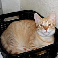 Adopt A Pet :: Marco - Belleville, MI