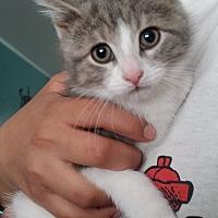 Adopt A Pet :: Waluigi - Huntington, IN