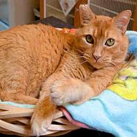 Adopt A Pet :: SADIE - Murray, UT