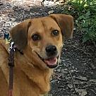 Adopt A Pet :: Pending! BeBe