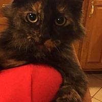 Adopt A Pet :: Tess - Horn Lake, MS