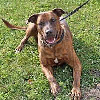 Adopt A Pet :: Berkley - Joliet, IL