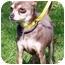 Photo 2 - Chihuahua Dog for adoption in Osseo, Minnesota - Boaz