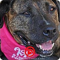 Adopt A Pet :: Shiva - Ojai, CA