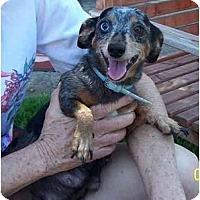Adopt A Pet :: Sassy - Garden Grove, CA