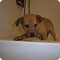 Adopt A Pet :: Toby - Windsor, MO