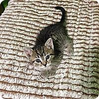 Adopt A Pet :: Zuma - Acme, PA