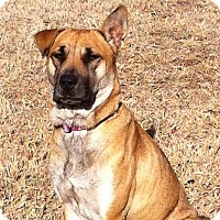 Adopt A Pet :: CANDY/Please read about me! - Glastonbury, CT