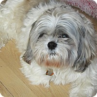 Adopt A Pet :: gizmo - Brant, ON
