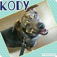 Adopt A Pet :: Kody - Scottsdale, AZ
