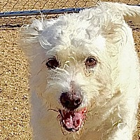 Adopt A Pet :: Cosita - Lancaster, CA