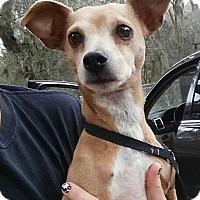 Adopt A Pet :: Nick - Gainesville, FL