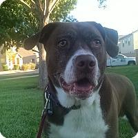 Adopt A Pet :: Lexi - Las Vegas, NV