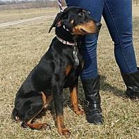Black and Tan Coonhound Dog for adoption in Trenton, Missouri - Shirley