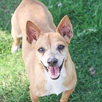 Adopt A Pet :: Roman - Austin, TX
