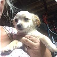 Adopt A Pet :: Clapton - Thousand Oaks, CA