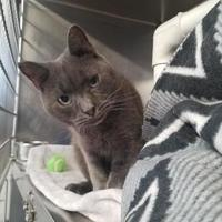 Adopt A Pet :: Beethoven - Wellsville, NY