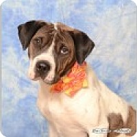Adopt A Pet :: Gemma - Pittsboro, NC